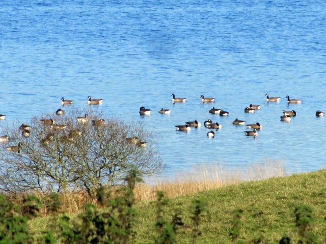 Loch Ken Nature reserve 021