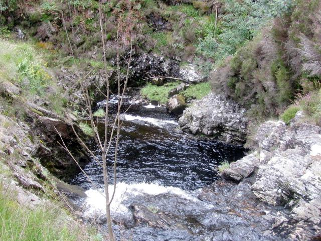 Grey Mares Tail 2 056