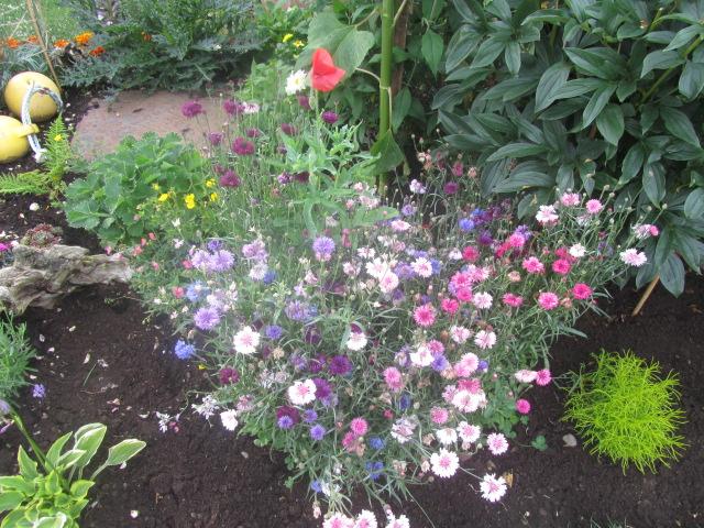 Garden Glory 032