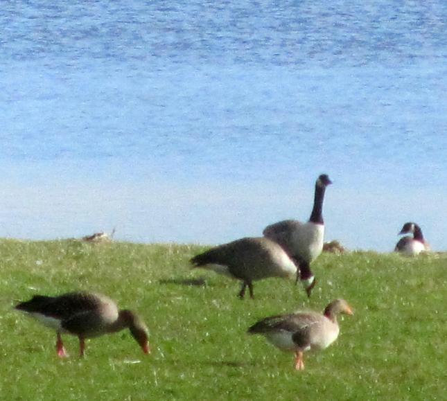 Loch Ken Circle 041