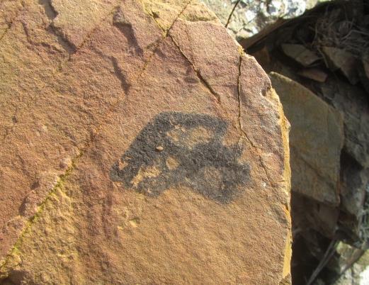 Fossil Hunt 026